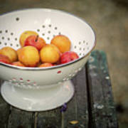 Still Life With Yellow Plums  Art Print