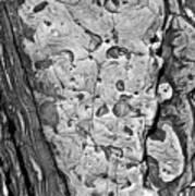 Stone Patterns Rock Map Art Print by Garry Gay