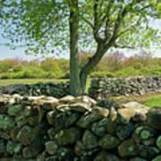 Stone Wall In Rhode Island Art Print