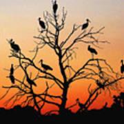 Storks In The Evening Sun Light Art Print