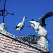 Storks Of Segovia Art Print