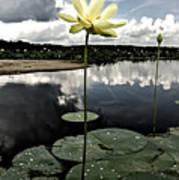 Stormy Lotus Art Print