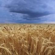 Stormy Wheat Field Art Print