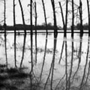 Stranded Trees II Art Print