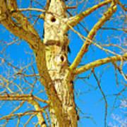Strange Tree Art Print