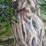 Strangler Fig Art Print
