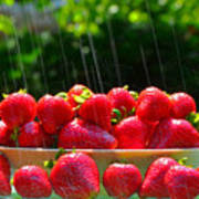 Strawberries And Summer Showers Art Print
