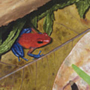Strawberry Poison Dart Frog Art Print