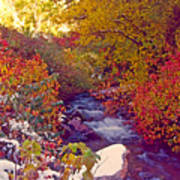 Stream In Autumn  Art Print