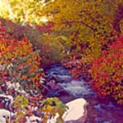 Stream in Autumn  Art Print