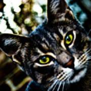Street Cat II Art Print