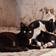Street Cats - Portugal Art Print