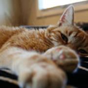 Stretching Cat Art Print