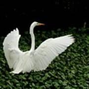 Stretching My Wings Art Print