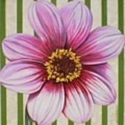 Stripes-dahlia I Art Print