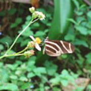 Stripped Butterfly Art Print