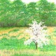 Studio Windows-7-5-08-dogwood Art Print