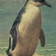 Study Of A Penguin Print by Henry Stacey Marks