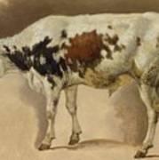 Study Of A Young Bull Art Print