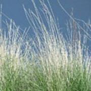 Study Of Grass Art Print