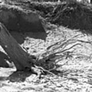 Stump In The Sand Art Print