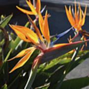 Stunning Bunch Of Flowers With Bright Orange Petals  Art Print