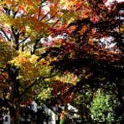 Suburban Autumn Art Print