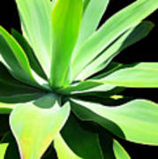 Succulent Agave Art By Sharon Cummings Art Print