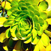 Succulent Close Up Art Print