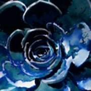 Succulent In Blue Art Print