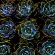Succulent Art Print by Rod Sterling