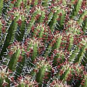 Succulent Series Vi Art Print