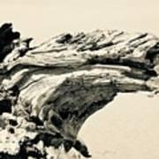 Suddenly A Lone Beach Camel Appeared Art Print