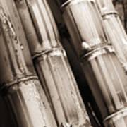 Sugar Cane - Sepia Art Print