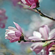 Sugar Magnolia Art Print