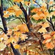 Sugar Maple Art Print