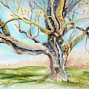 Sugar Maple On Mutton Lane Art Print