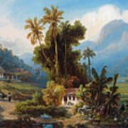 Sugarcane Plantation Of San Esteban Near Puerto Cabello, Venezuela Art Print