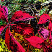 Sumac Beauty Art Print