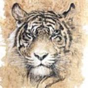 Sumatra Art Print by Debra Jones