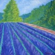Summer At The Lavender Farm Art Print