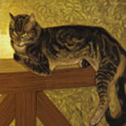 Summer Cat On A Balustrade Art Print