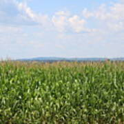 Summer Corn And Blue Skies In Maine  Art Print