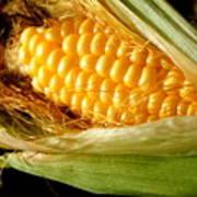Summer Corn Xl Farm Nature Harvest Art Print