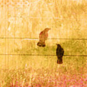 Summer Crows Art Print