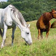 Summer Evening For Horses Art Print