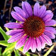 Summer Flower In Fading Light Art Print