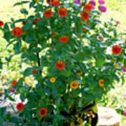 Summer Flowers 10 Art Print
