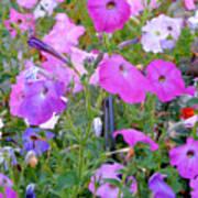 Summer Flowers 8 Art Print