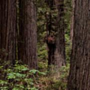 Summer In Redwood National Park Vertical Art Print